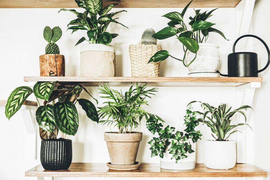planten maken gelukkig