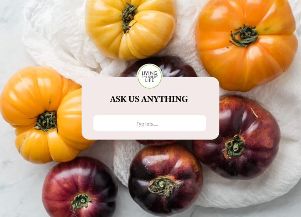 Q&A vegan vragen